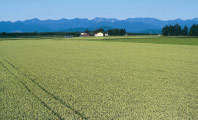 小麦畑と日高山脈